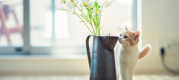 cat-kitten-vase-flowers-photo-wallpaper-1920x1200